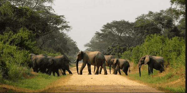Forbes names Uganda as one of the safest places to visit this October